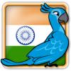 Angry Birds India Avatar 6