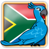 Angry Birds South Africa Avatar 6