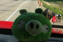 King Pig in Semi Truck by Joanna Strand