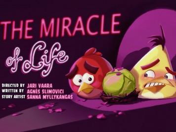 Angry Birds Season 2 Episode 8 Miracle of Life