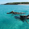Swimming Pigs at Piggie Island