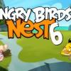 Nest Birdday.jpg