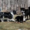 RnR with puppy Mia.jpg