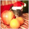 4413777efb4c2c52e1aa61874710ce69–celebrating-christmas-ratatouille.jpg