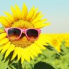 Sunflower-with-sunglasses.jpg