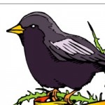 Profile picture of Lark Bunting