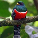 Profile picture of trogon