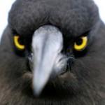 Profile picture of Dmitri