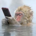 Profile picture of solitaire