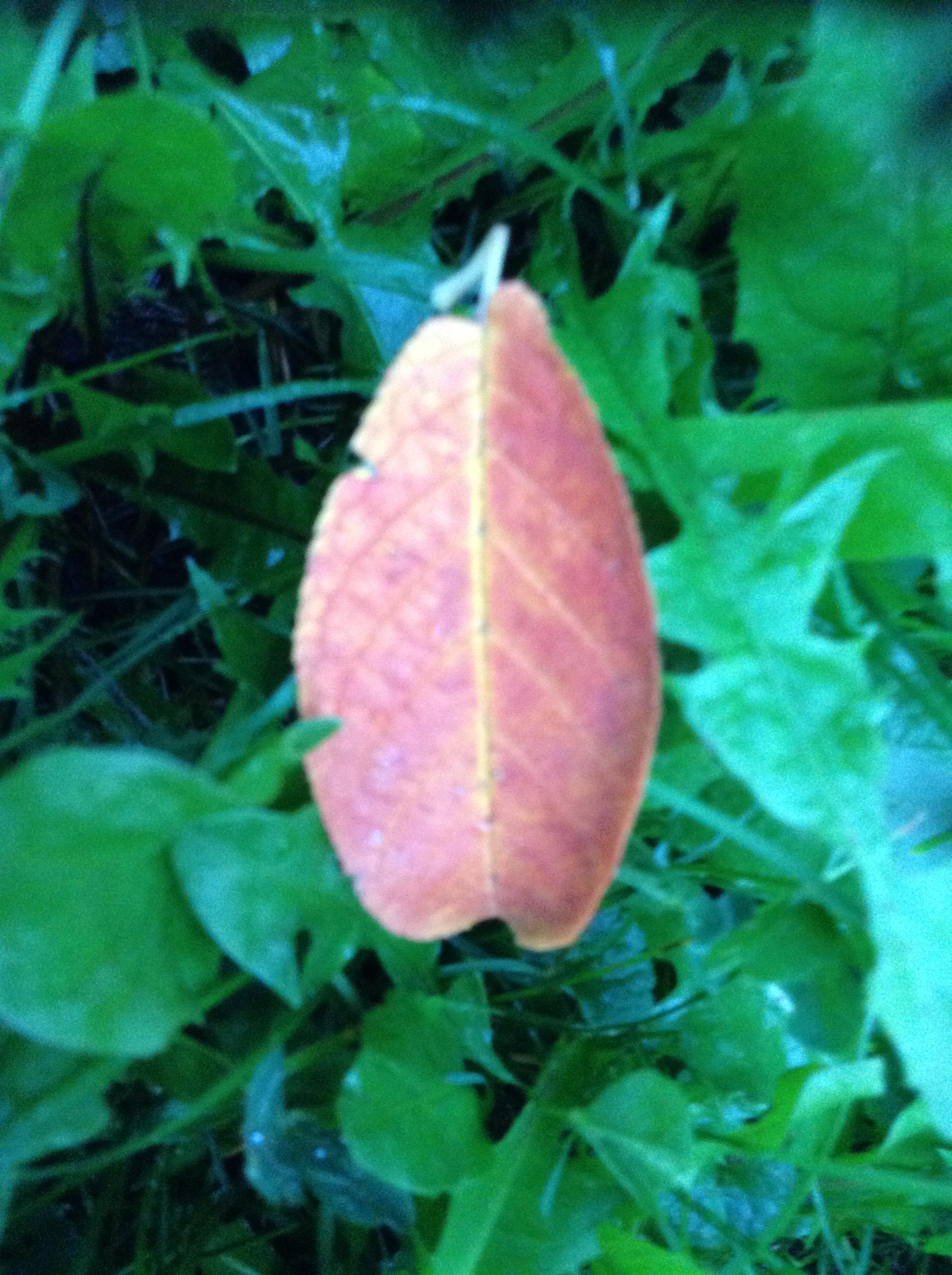 Cool leaf early fall